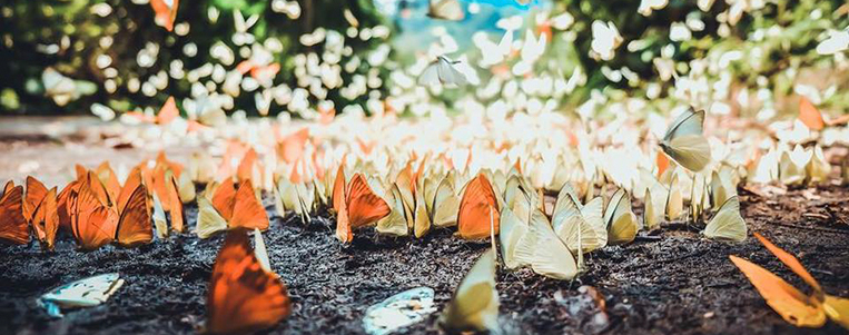 Perdu dans la forêt de papillons du parc national de Cuc Phuong, Ninh Binh
