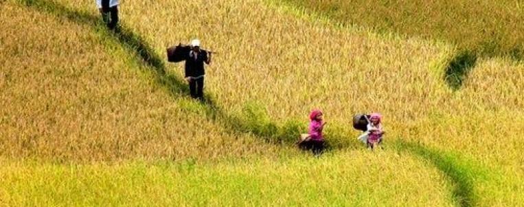 Vietnam: Climat et meilleur moment de l'année pour visiter