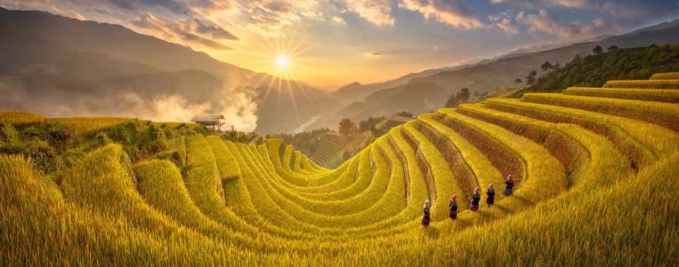 Voyage au Vietnam en Octobre: Explorer les rizières dorées de Mu Cang Chai